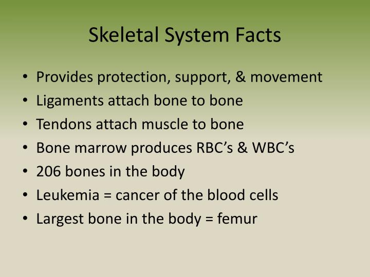 PPT - Anatomy & Physiology PowerPoint Presentation - ID:2034178