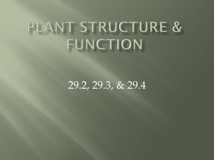 plant structure function n.