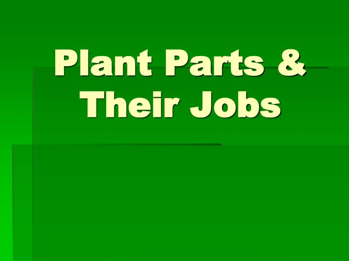 plant parts their jobs n.