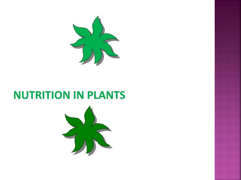 Ppt Nutrition In Plants Powerpoint Presentation Id 2034538