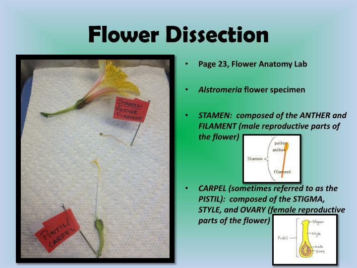 Ppt Plant Stem Powerpoint Presentation Id2034612