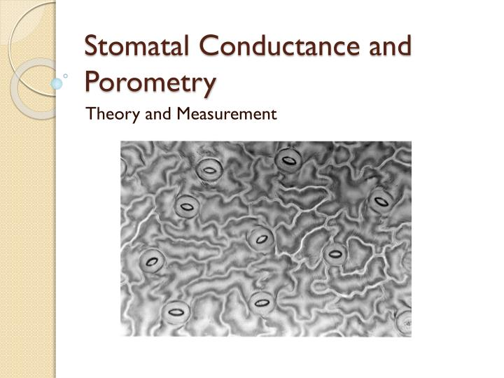 stomatal conductance and porometry n.