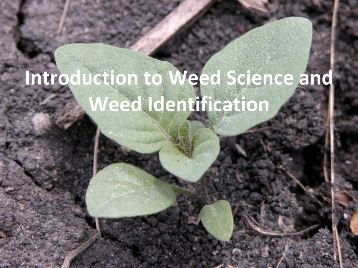 introduction to weed s cience and w eed identification n.