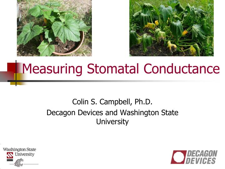 measuring stomatal conductance n.