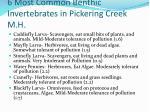 6 most common benthic invertebrates in pickering creek m h