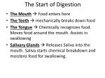 the start of digestion