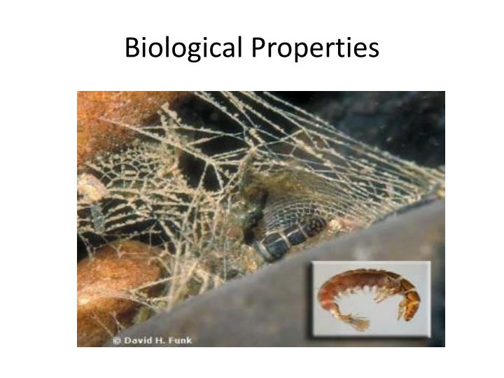 biological properties n.