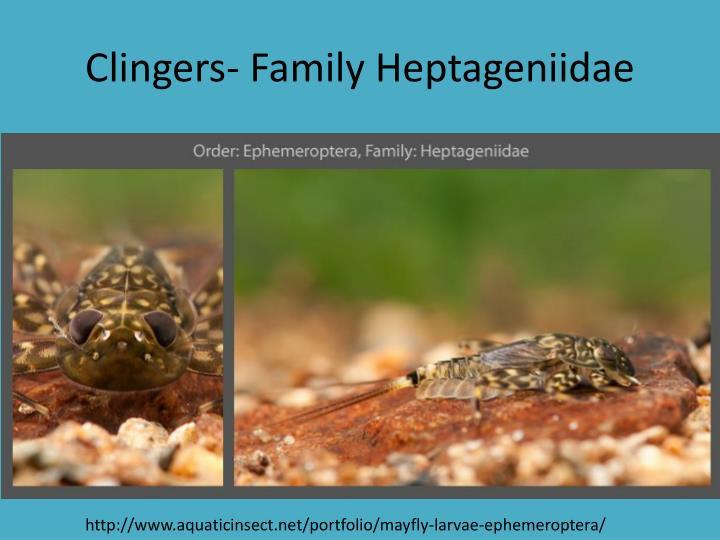Clingers- Family