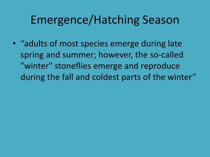 Emergence/Hatching Season