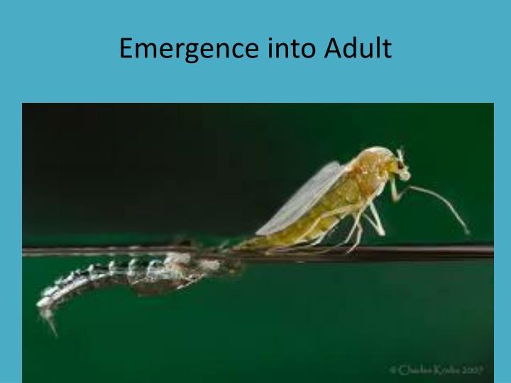 Emergence into Adult