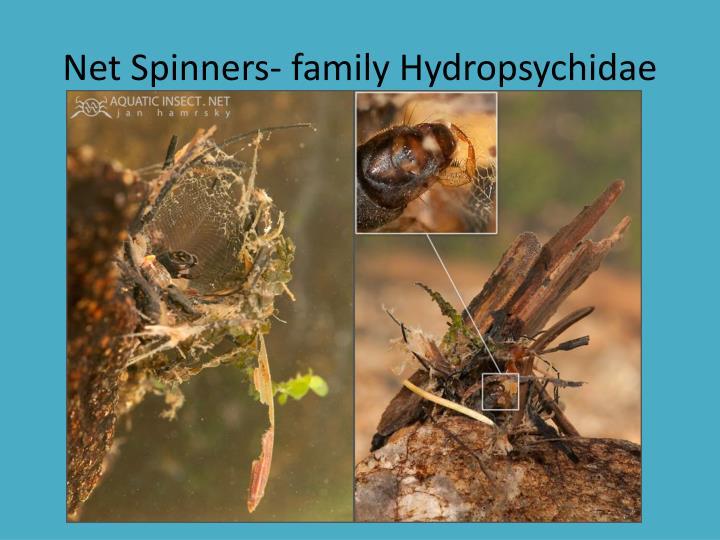 Net Spinners- family