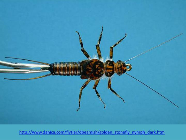 http://www.danica.com/flytier/dbeamish/golden_stonefly_nymph_dark.htm
