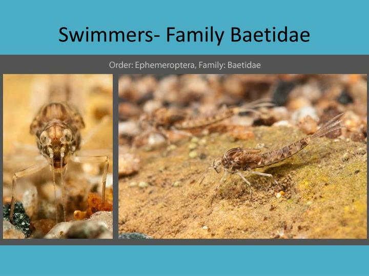 Swimmers- Family