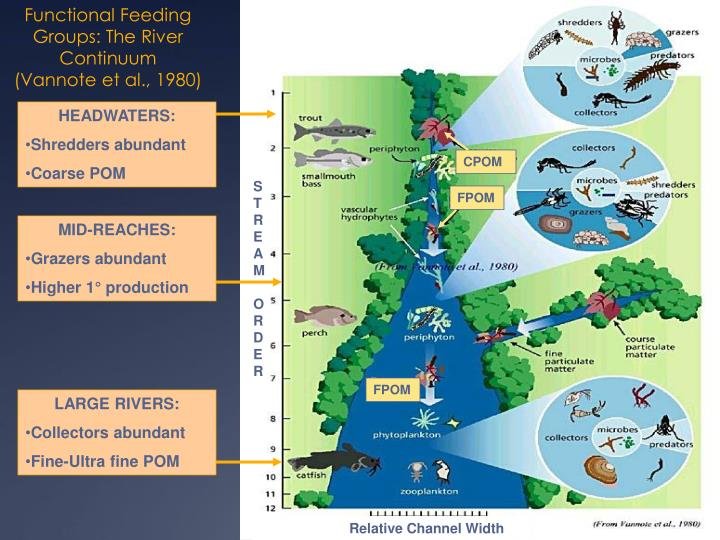 PPT - Biology & Ecology of SE MN Karst Region Streams ...