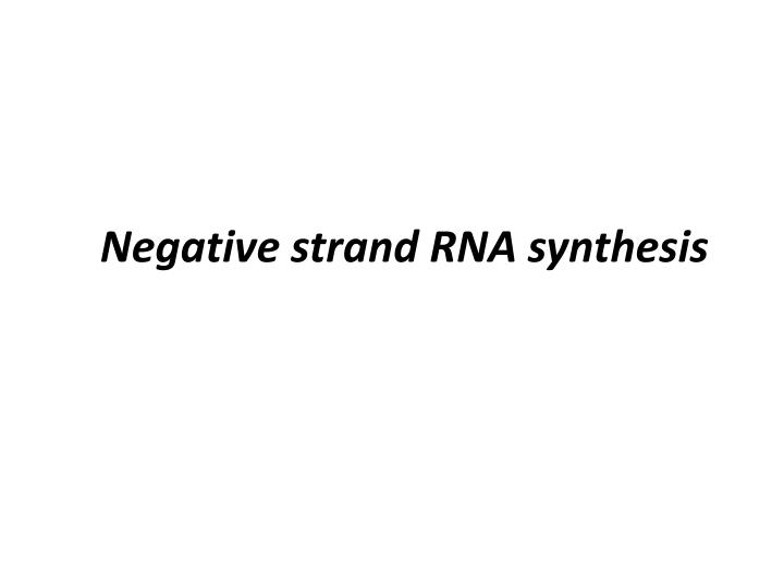 negative strand rna synthesis n.