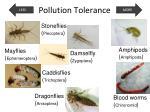 pollution tolerance