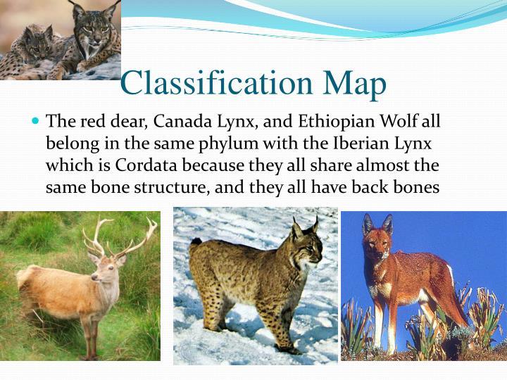 Classification Map