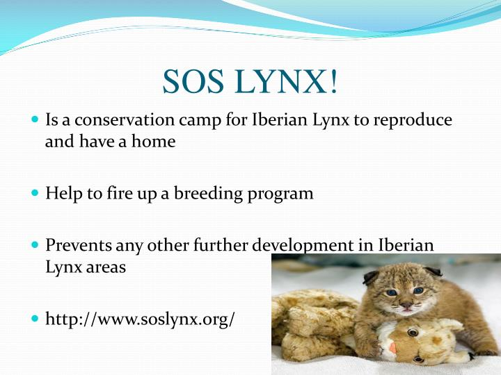 SOS LYNX!