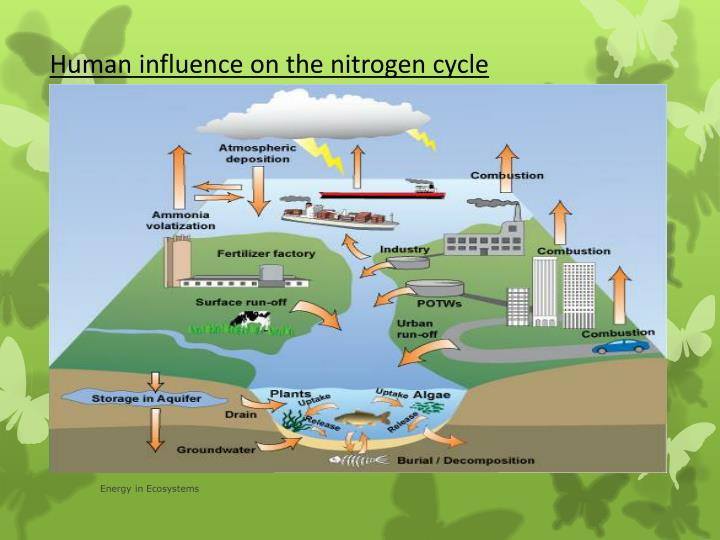 negative consequences of humans interference in the nitrogen cycle Anthropogenic effects on the global nitrogen cycle effects on human health – negative feedbacks to.