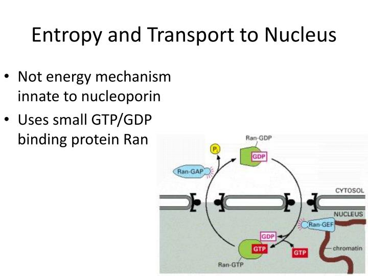 Entropy and Transport to Nucleus
