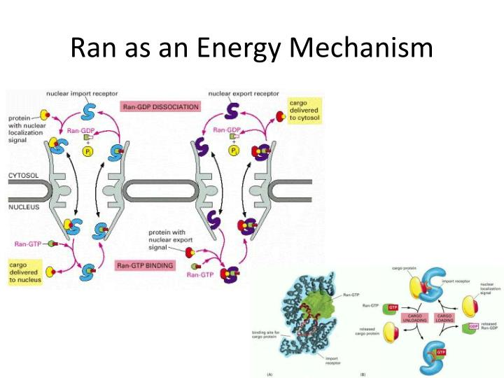 Ran as an Energy Mechanism
