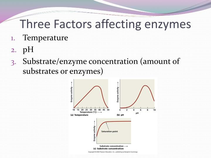 enzyme concentration affects the rate of Video: effect of enzyme concentration on enzyme activity in this lesson, we'll explore what an enzyme is, what an enzymatic reaction is and what happens to the rate of a reaction if you add more.