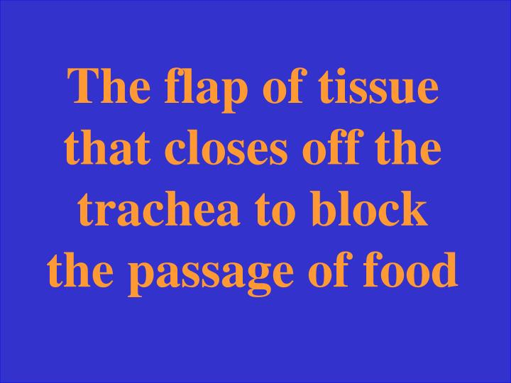 The flap of tissue that closes off the trachea to block the passage of food