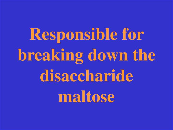 Responsible for breaking down the disaccharide maltose