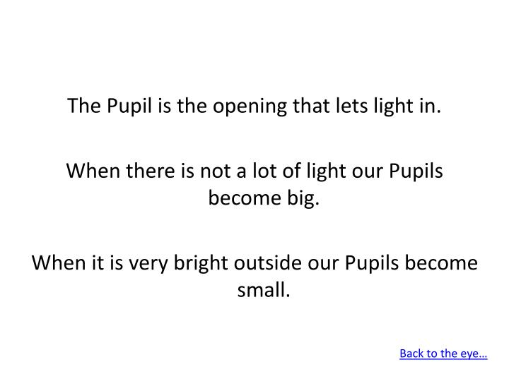 The Pupil is the opening that lets light in.