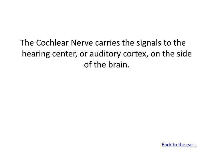 The Cochlear Nerve carries the signals to the hearing center, or auditory cortex, on the side of the brain.