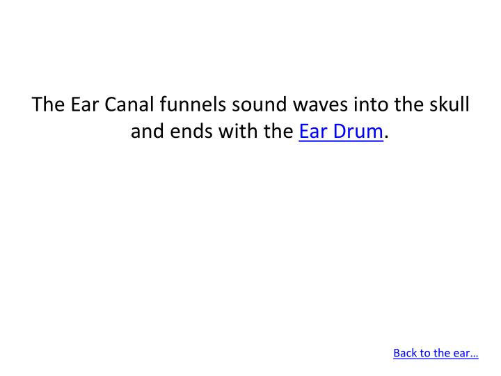 The Ear Canal funnels sound waves into the skull and ends with the
