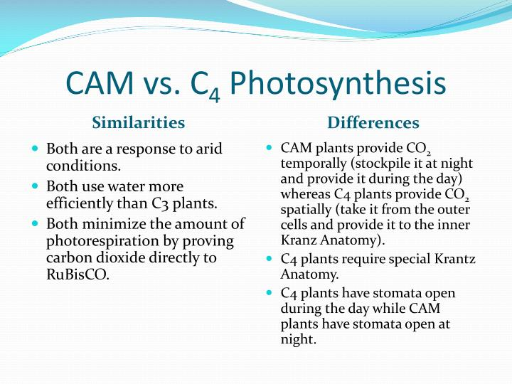 PPT - Types of Photosynthesis PowerPoint Presentation - ID:2041668