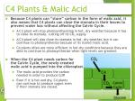 c4 plants malic acid