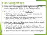 plant adaptations1