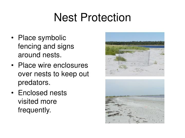 Nest Protection