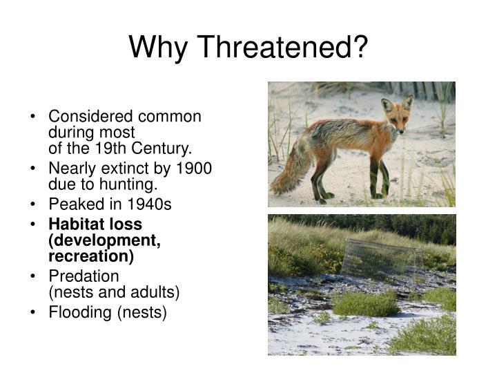 Why Threatened?