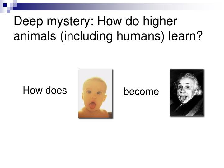 Deep mystery: How do higher animals (including humans) learn?