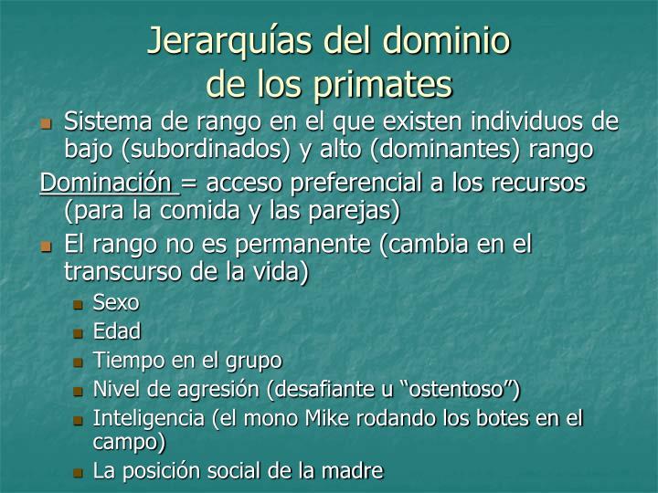 Jerarquías del dominio