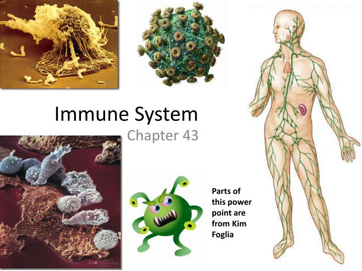 cancer and the immune system essay