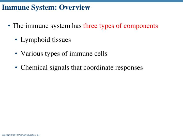 immune system overview n.