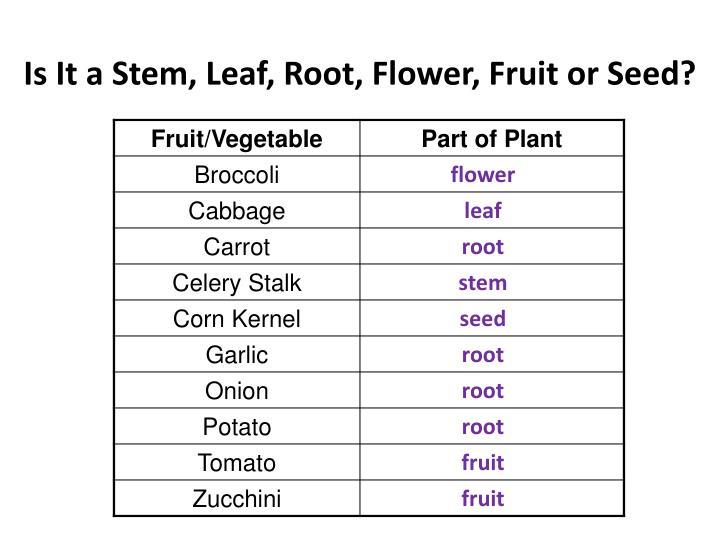 Is It a Stem, Leaf, Root, Flower, Fruit or Seed?