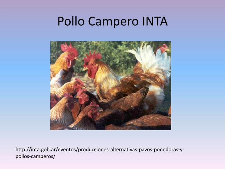 Pollo Campero INTA