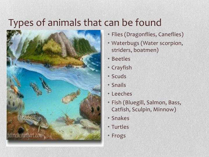 Types of animals that can be found