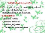 suku bacillaceae