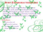 suku enterobacteriaceae