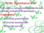 suku neisseriaceae
