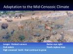 adaptation to the mid cenozoic climate