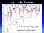 mammalian evolution