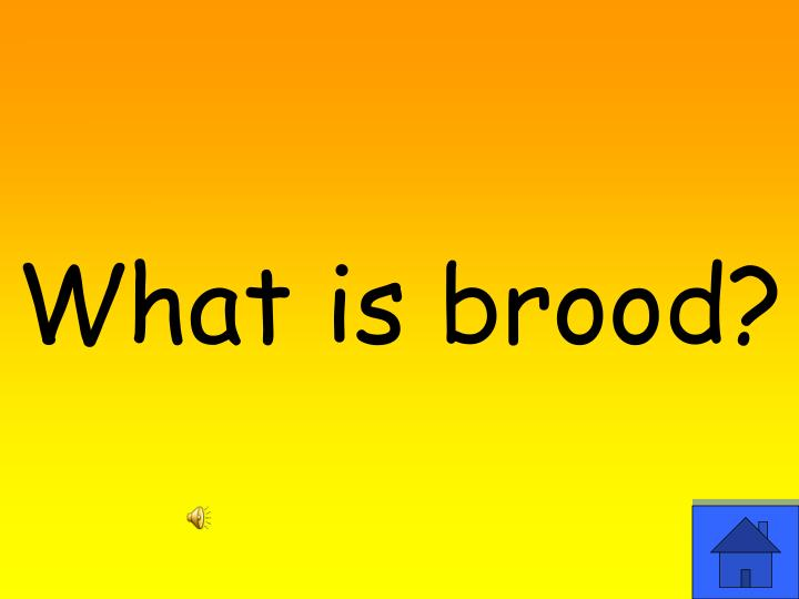 What is brood?