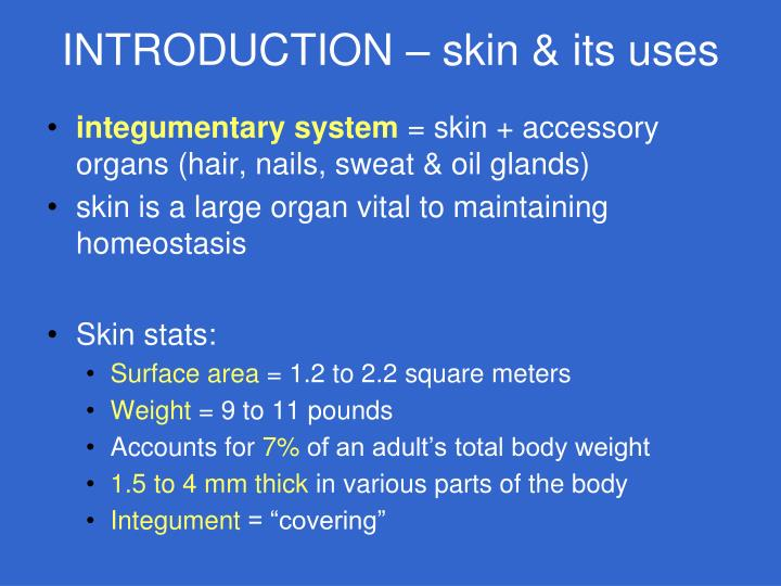 PPT - THE INTEGUMENTARY SYSTEM —Chapter 6 PowerPoint Presentation ...